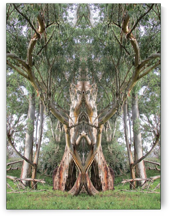 THE CHURCH BETWEEN THE TREES by Tim Glasby