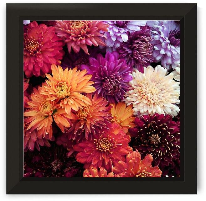 Chrysanthemums  by Winston Mauricio Casco Sobalvarro