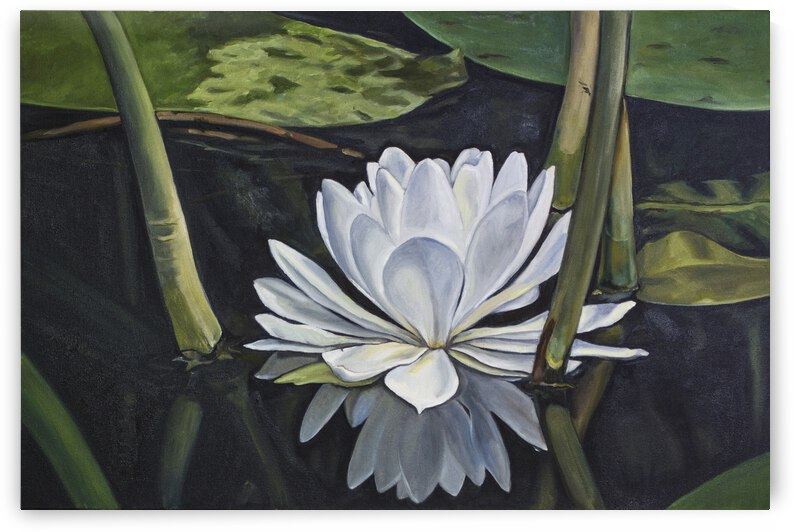 Water Lily by Cathy Colson