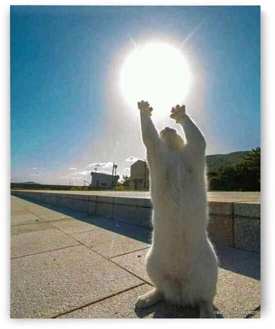 A photo of a white bear struggling in a sunny summer sky. by Artwork Myself