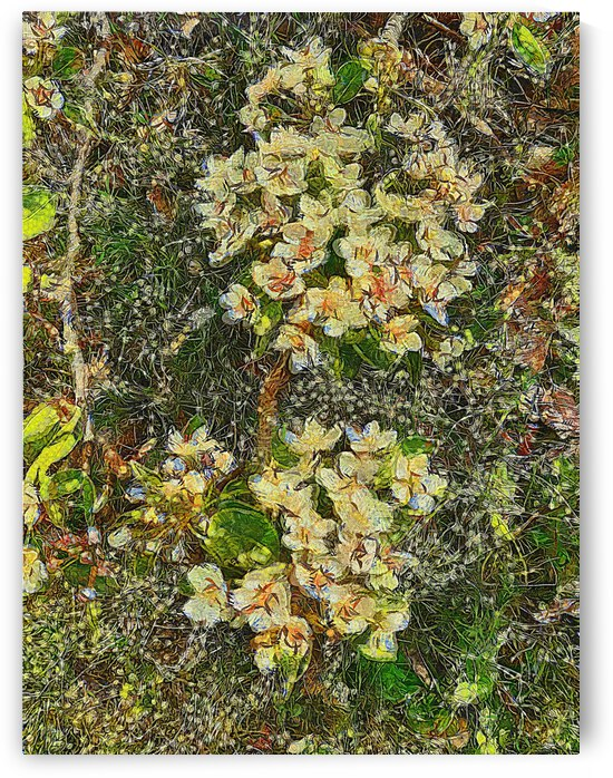 Pear Blossom Impressions by Dorothy Berry-Lound
