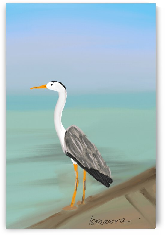 Birds of Maldives by Isra Aara Ibrahim Shafeeu