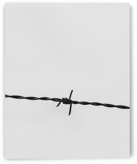 Wire by Bob Orsillo