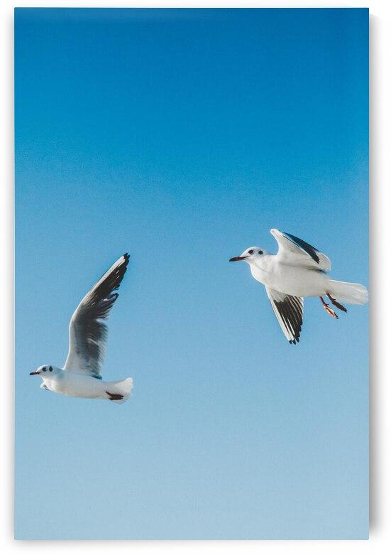Birds fly high by Reg Bender