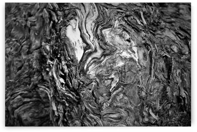Bark of a Tree by Cameron Wilson Photos