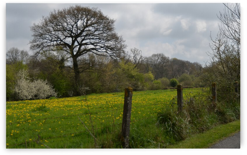 field of the Normand grove prairie du bocage by ch Ragaine