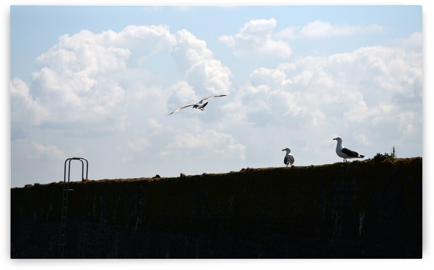Seagulls in the sky Goeland dans le ciel by ch Ragaine