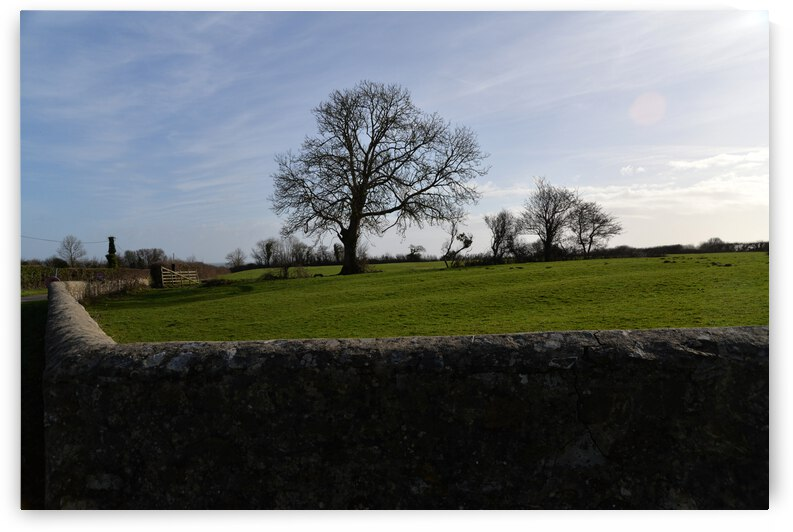 Old tree in its field. Vieil arbre dans son champ by ch Ragaine