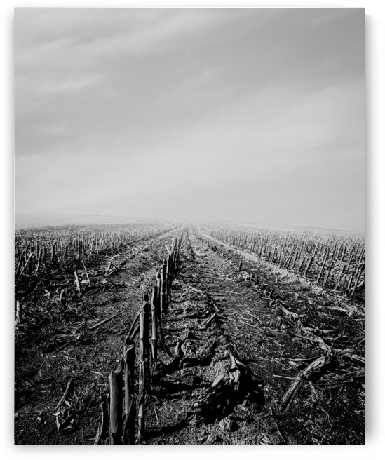 After The Harvest by Bob Orsillo