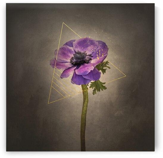 Graceful flower - Anemone coronaria | vintage style gold by Melanie Viola