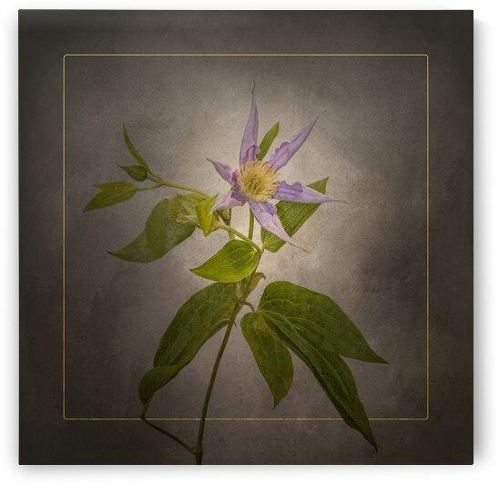 Graceful flower - Clematis | vintage style gold by Melanie Viola