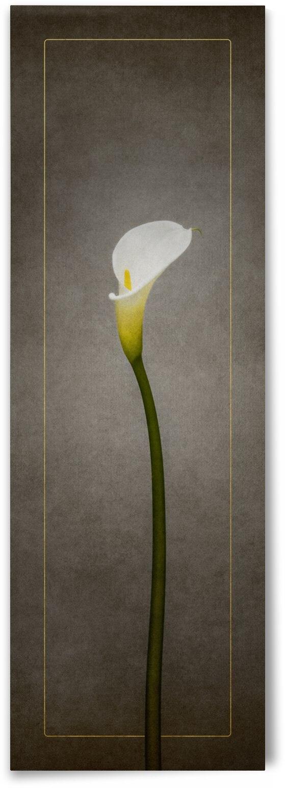 Graceful flower - Calla No. 1 | vintage style gold by Melanie Viola