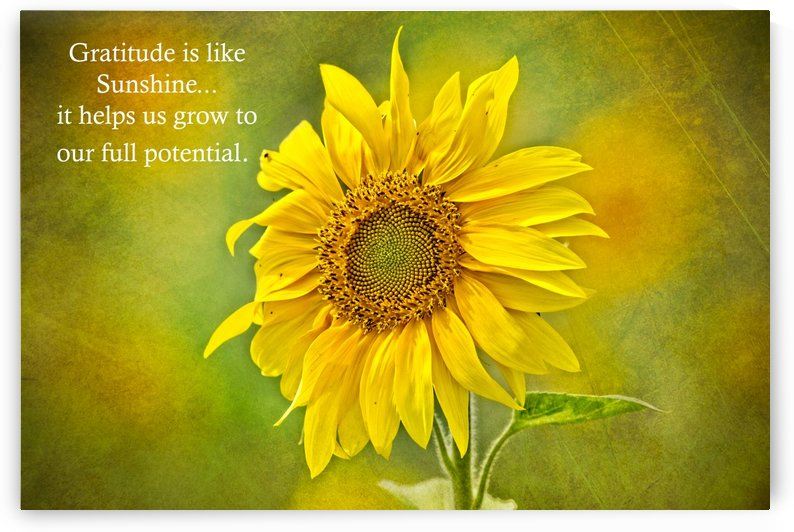 Gratitude is Like Sunshine by Michel Soucy