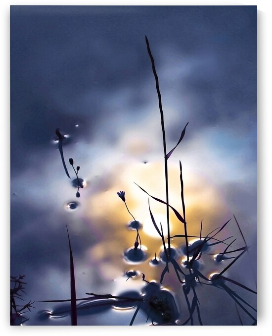 Herbe et reflet by Photo Max