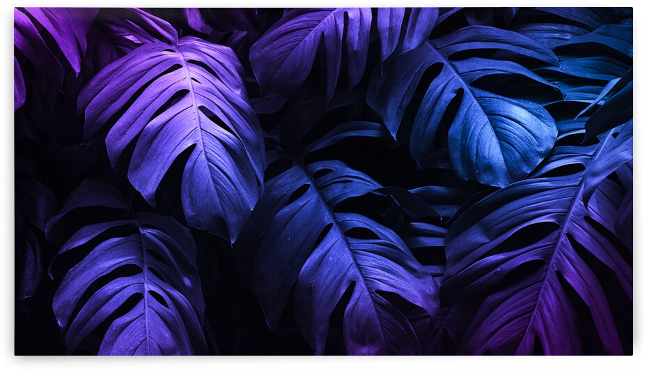 tropical leaves under purple light by Canvapro