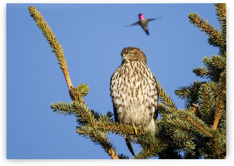 Do You Hear A Humming Noise by Randy Hall by Randy Hall