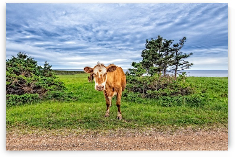 Moo by Michel Soucy
