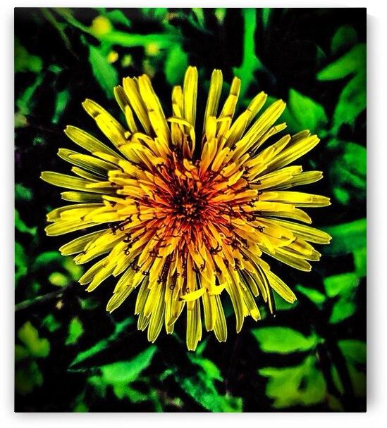 Flower Power by J Gilbert Photography