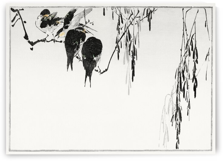 Perched magpies by Tony Tudor