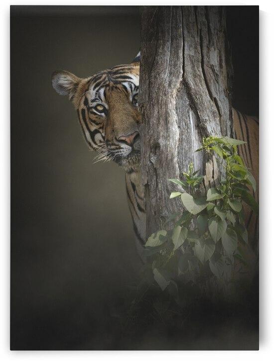 Hide and seek by Arvind karthik Photography