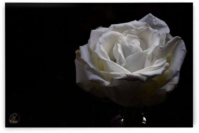 The Rose Dance by Bivi Franco