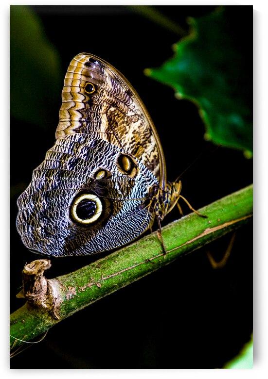 Butterfly Beauty  by Michael Stephen Dikovitsky
