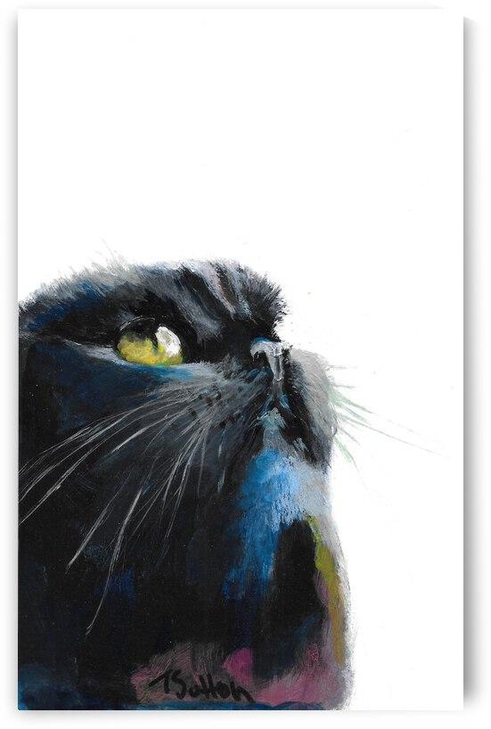 black cat   by T Sutton art