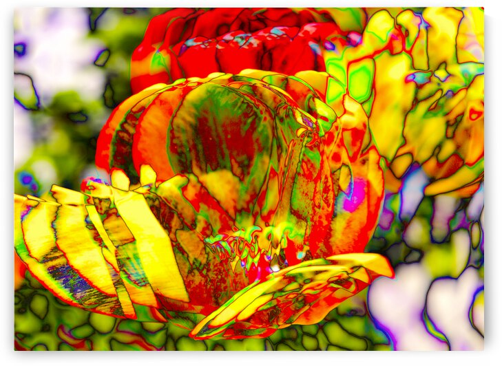 Tulipes  1 by Jean Pierre Begin