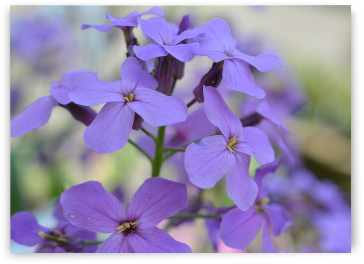 Purple Floral Photograph by Katherine Lindsey Photography