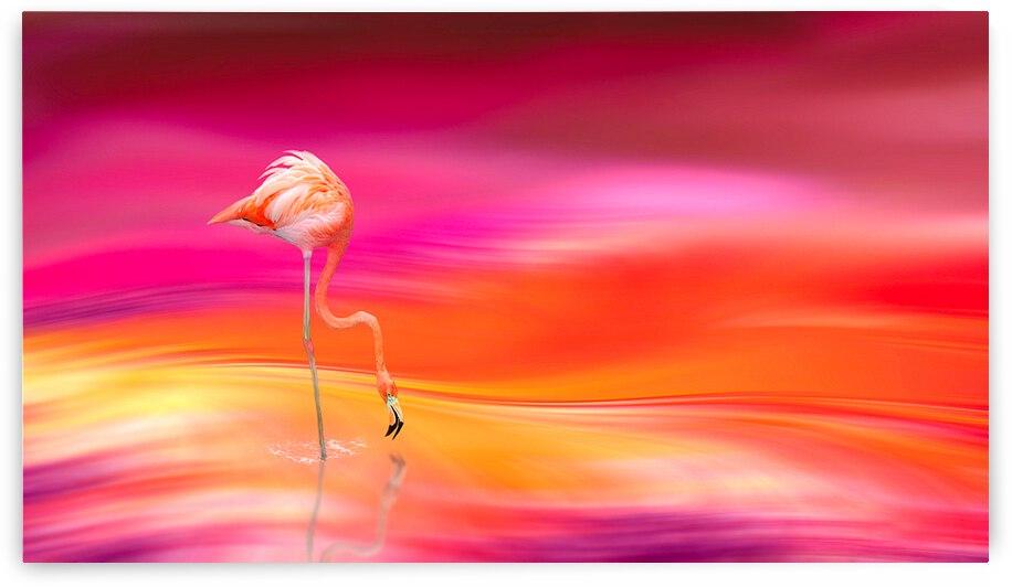 Flamingo  by Angel Photo Art