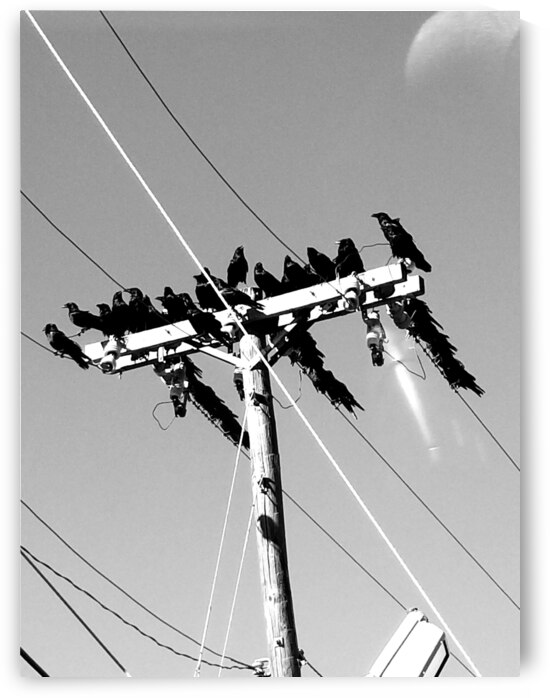 Birds on a wire by Cindy Rogers
