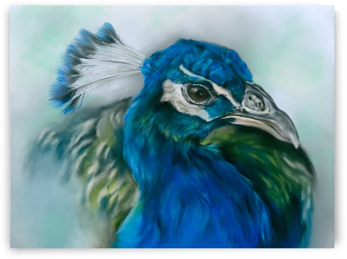 Pretty Peacock by MM Anderson