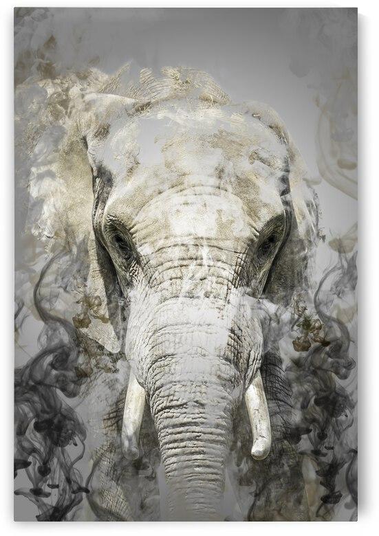 Elephant by Photobec