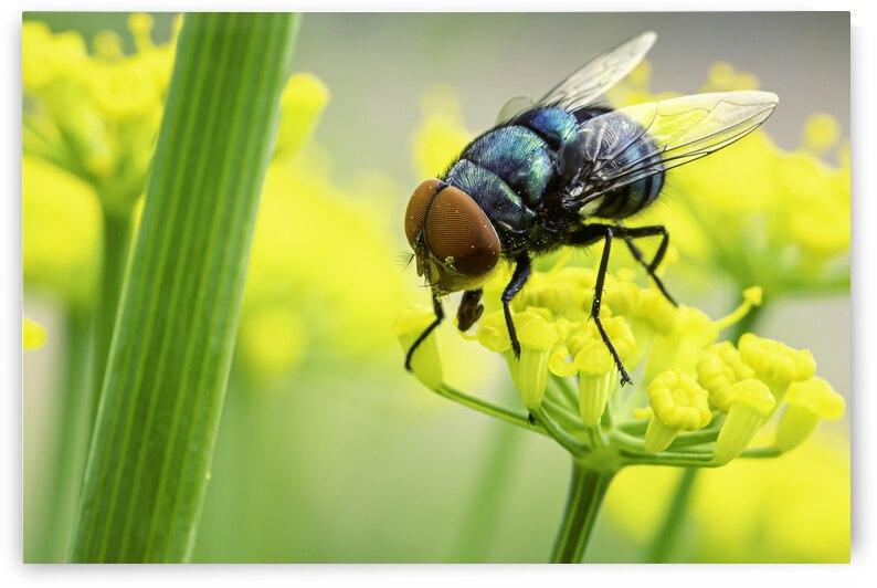 Fly In Flower City by Paul Punzo