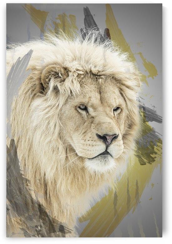 Lion by Photobec