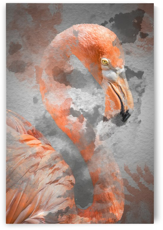 Flamant  by Photobec