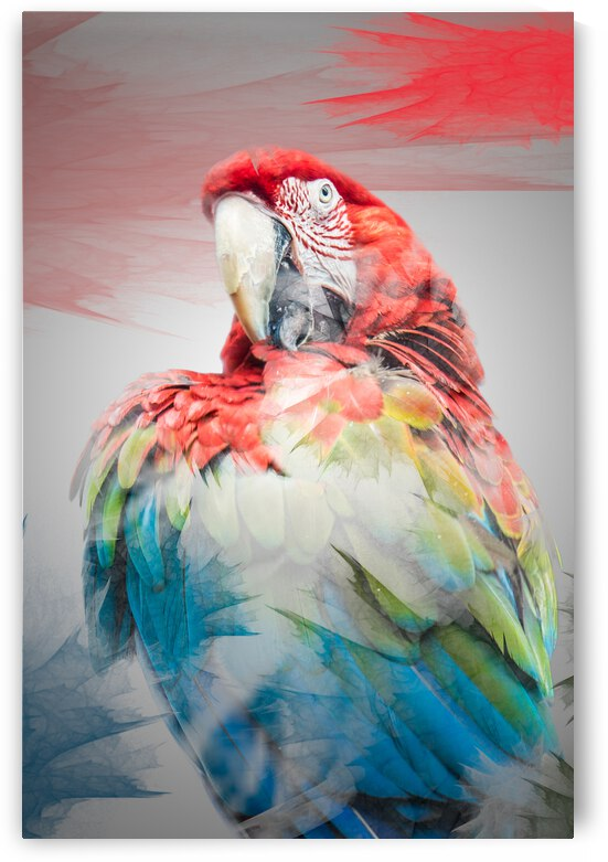 Perroquet  by Photobec
