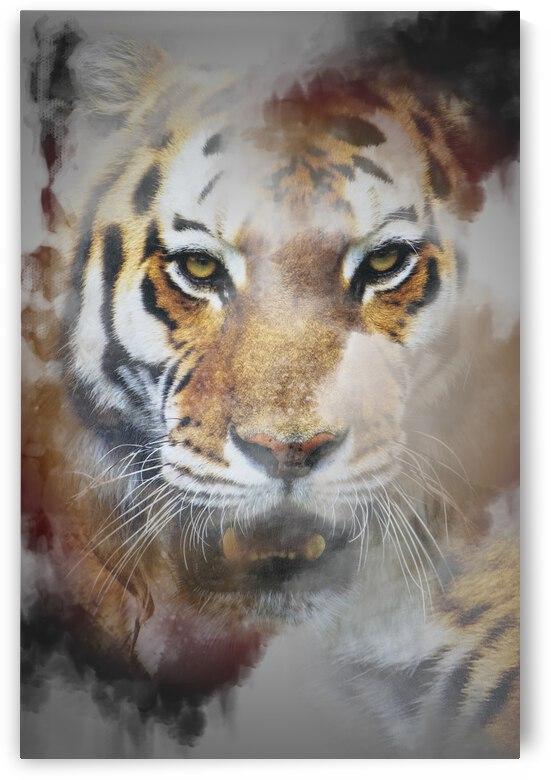 Tigre by Photobec