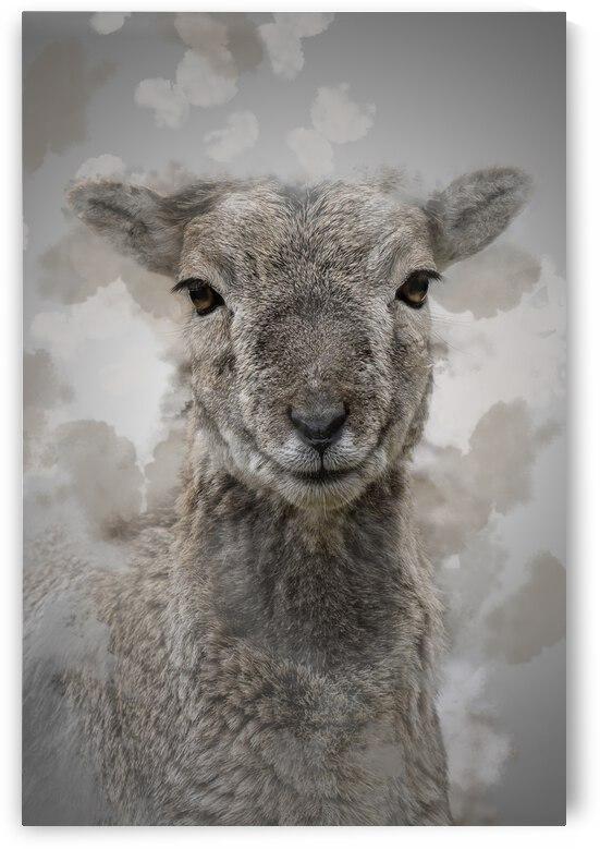 Mouflon by Photobec