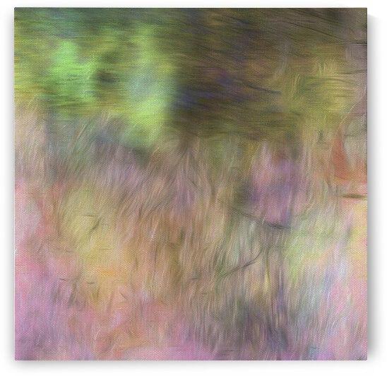 Shy Rainbow by Dorothy Berry-Lound