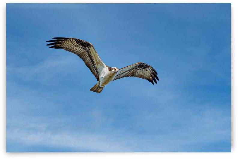 Hunting blue skies II - D75 1105 by GreigsPhotoWorks