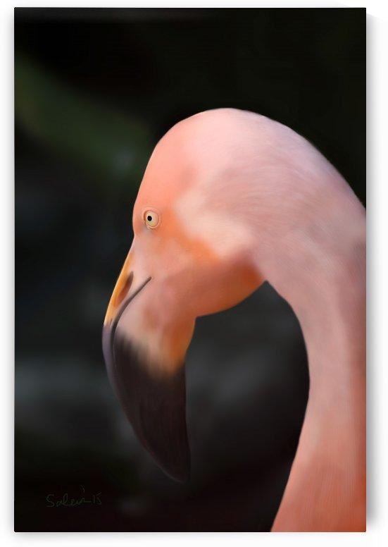 Flamingo by Sarah Tracy