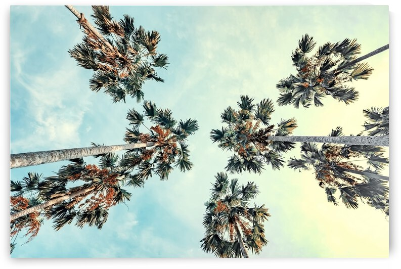 Palm trees by Manjik Pictures