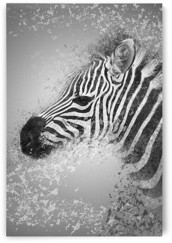 zebre 2 by Photobec