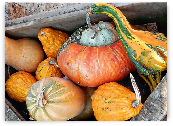 Harvest Gourds and Pumpkins by Dorothy Berry-Lound