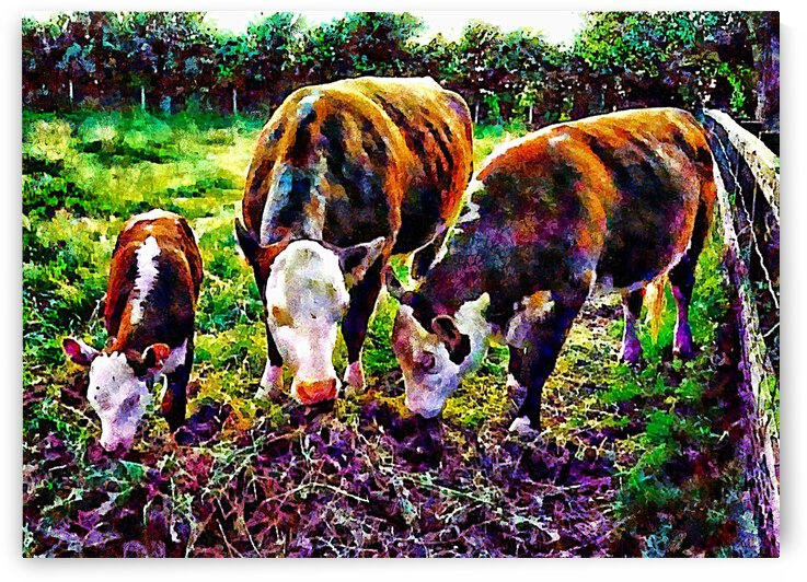 Hereford Cross Family Feeding Time by Dorothy Berry-Lound