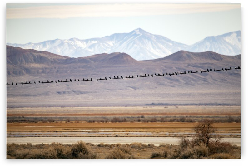 Birds on a Wire by Evan Petty Photography