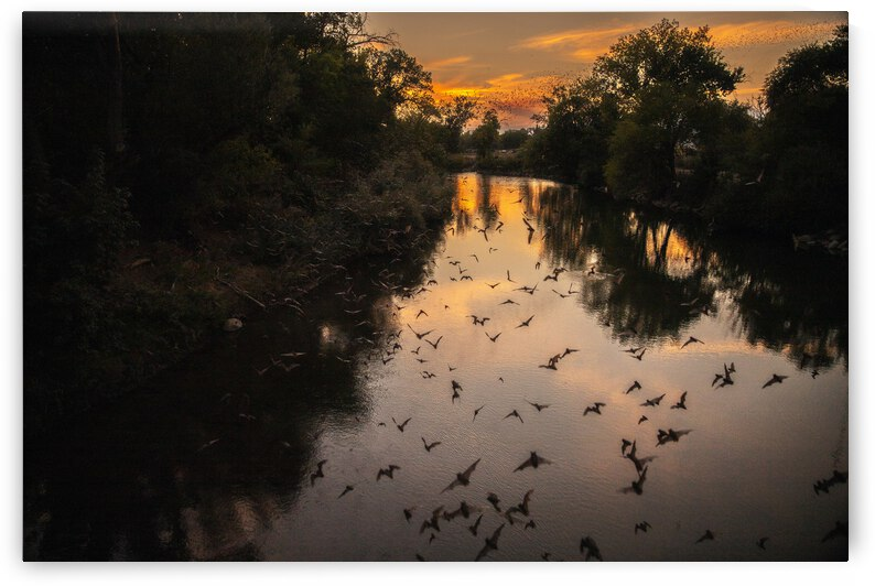 Bats Migrating at Sunset by Evan Petty Photography