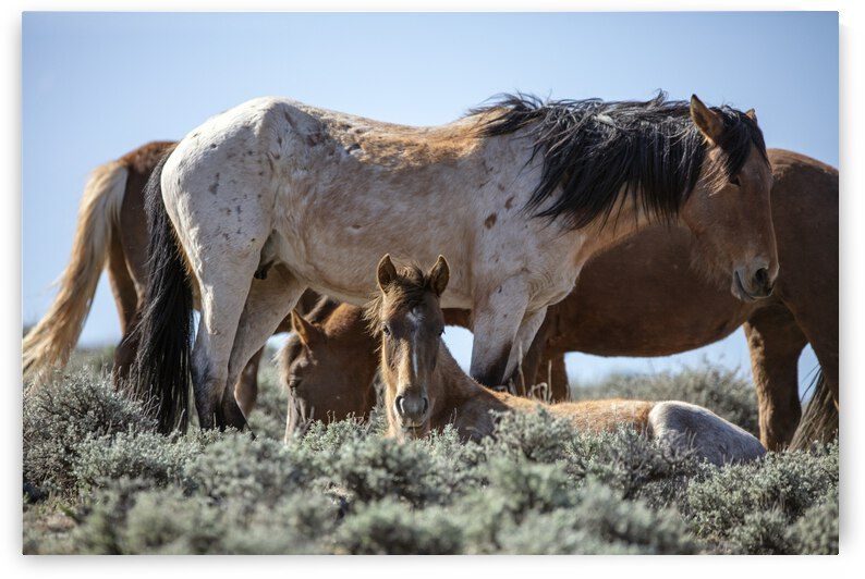 Wild Horses in the Sun by Evan Petty Photography