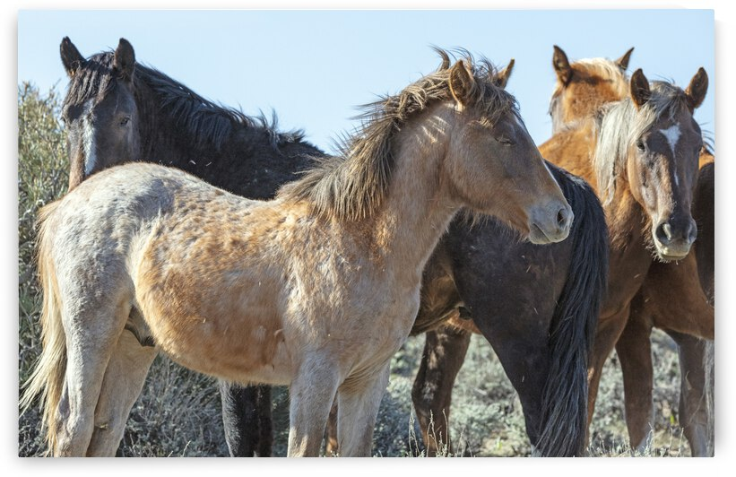 Wild Horses in the Morning Sun by Evan Petty Photography
